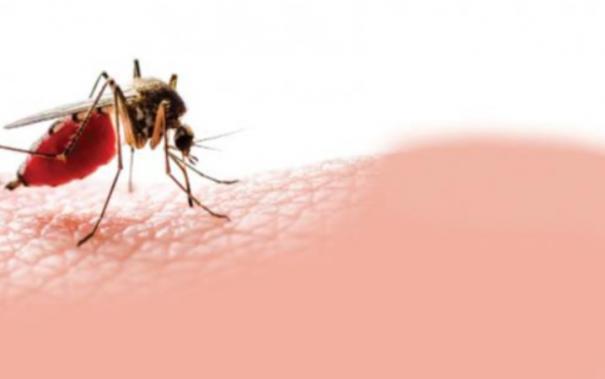 madurai-7-year-old-boy-dies-of-fever-parents-suspect-dengue