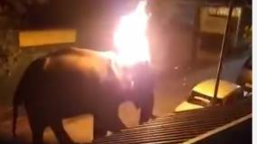 wild-elephant-set-ablaze-and-tortured-in-nilgiris-exposed-video-posted-on-social-media