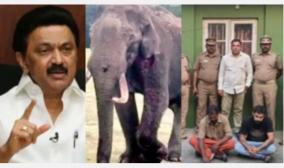 those-who-killed-the-elephant-must-be-punished-swiftly-so-as-not-to-escape-the-alleys-of-the-law-stalin