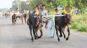 cow-cart-competition