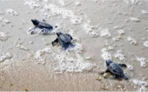 national-marine-turtle