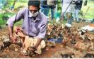 avian-influenza