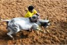 high-court-orders-ban-on-first-prize-car-for-cowboy-at-alankanallur-jallikkattu