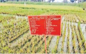 traditional-paddy-varieties