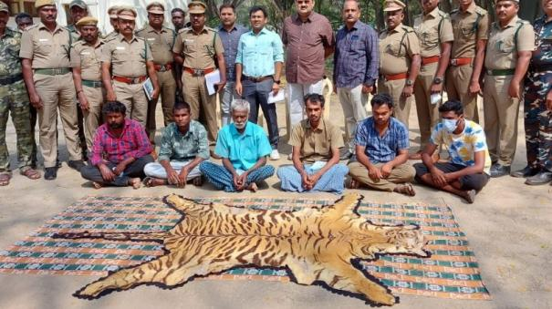 6-arrested-for-trying-to-sell-tiger-skin-near-pollachi