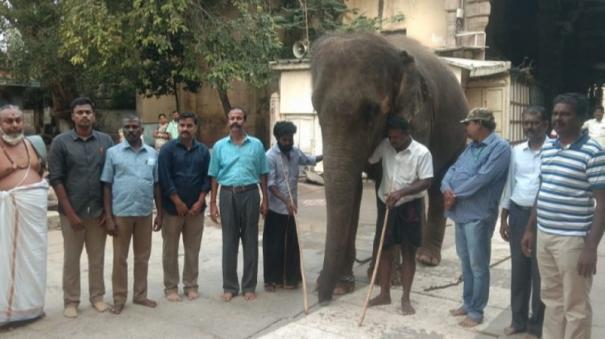 madurai-tiruparankundram-temple-elephant-gears-for-camp