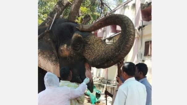 corona-test-for-palani-temple-elephant-going-to-refreshment-camp