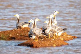 european-birds