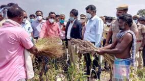 central-team-visits-virudhunagar-to-assess-crop-damages