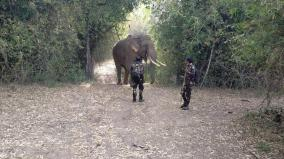 elephant-escaped-into-forest