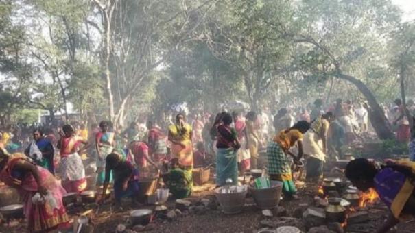 singampunari-pongal-for-cattles