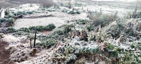 heavy-frost