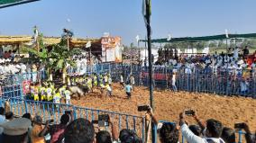 jallikattu-for-the-first-time-in-dharmapuri-district