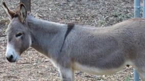sanvutary-for-donkeys