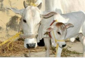 cow-science-exam-ugc-asks-universities-to-encourage-students-to-participate