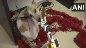 lucknow-man-builds-robot-to-take-care-of-blind-and-deaf-dog