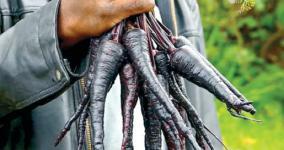 black-carrot