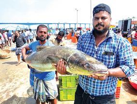 cobia-fish