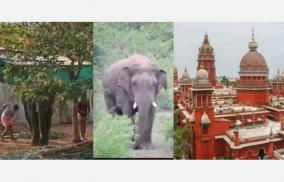 torture-of-elephants-policy-decision-to-ban-elephant-breeding-in-private-and-temples-high-court-recommendation