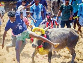500-bulls-participation