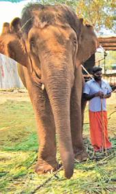 elephants-welfare-camp