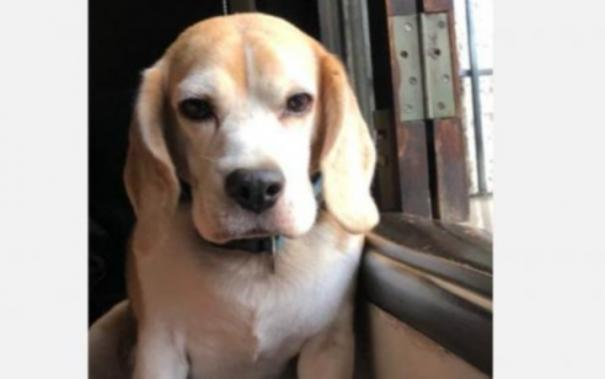 missing-dog-rescued-by-chennai-police