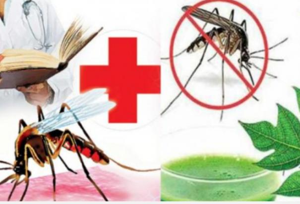 outbreak-of-dengue-fever-in-trichy-42-affected-in-february-alone