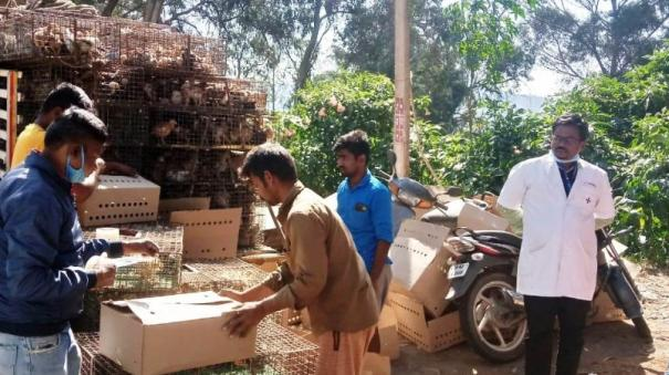 aiadmk-distributed-chickens-to-the-tribe-in-coonoor