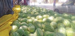 water-melon-season