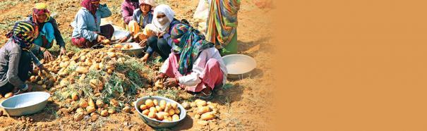 western-agricultural-subsidies