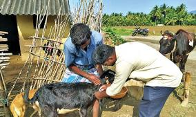 measures-to-protect-livestock