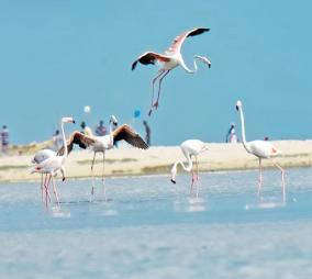 flamingo-birds
