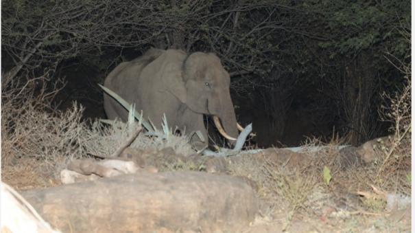 forest-department-injected-with-sedatives-to-catch-a-single-elephant-near-dharmapuri-plan-beyond-the-dense-forest