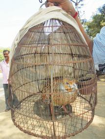 gowdari-hunting