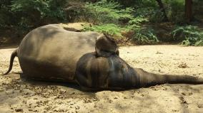 elephant-dead-in-hokennagal