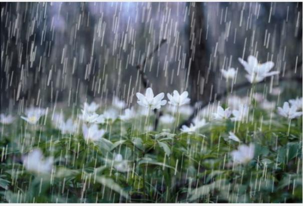 chance-of-rain-in-15-districts-of-tamil-nadu-in-the-next-3-hours