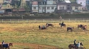 horse-race-in-nilgiris