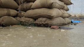paddy-bundles-soaked-by-sudden-rains-in-pudukkottai-farmers-suffer