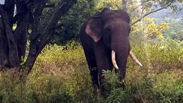 elephant-affected-in-nilgiris