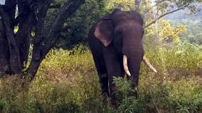 elephant-affected-in-nilgiris