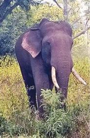rivaldo-s-elephant