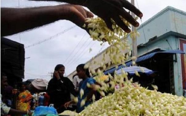 corona-spread-brings-down-jasmine-price-in-madurai-markets