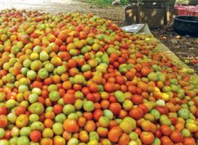 tomato-prices