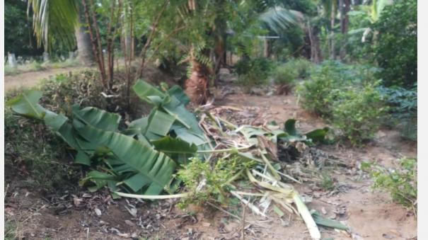 ambur-farmers-lost-by-single-elephant-decide-to-stand-in-the-land