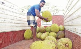 panruti-jack-fruit