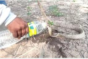 snake-drink-water-from-a-plastic-bottle-near-cuddalore