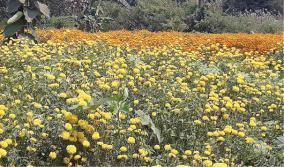 samandhi-flower