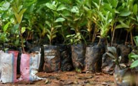 24-lakh-saplings