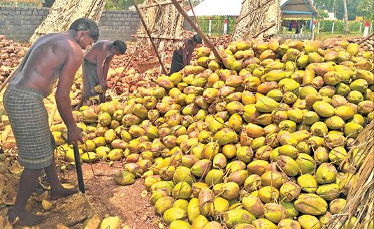 coconut-traders