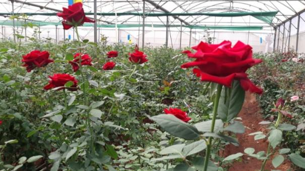 corona-flowers-stagnant-at-hosur-market-farmers-suffer
